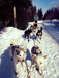 10 bucket list ideas for travelers, including: Dog Sledding in Canada?  Awesome.