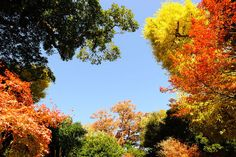 The Rich Colors of Fall Foliage | Autumn Foliage Images, Fall Leaves, Changing Leaves & Foliage