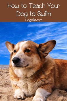 dog training,teach your dog,dog learning,dog tips,dog hacks Dog Life Vest, Easiest Dogs To Train, Buy A Dog, Puppy Care, Pet Care, Dog Care Tips, Pet Tips, Dog Hacks, Dog Barking