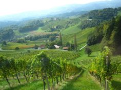 Vineyards in the Steiermark region of Austria where I lived with my grandparents. European Countries, Places Of Interest, Grandparents, Travel Ideas, Austria, Places To See, Vineyard, Beautiful Places, To Go