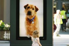 Battersea Dogs & Cats Home Sent Digital Pooches to the Mall Battersea Dogs Home, Best Marketing Campaigns, Mall, Ogilvy Mather, Homeless Dogs, Digital Signage, Dog Names, Retail Design, Dog Friends