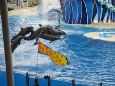 I remember going to Sea World as a kid and basically remembering just shows. Sea World is so much more now! Family Holiday Destinations, Sea And Ocean, Best Blogs, Sea World, Oceans, Under The Sea, Travel Usa, Dolphins, Family Travel