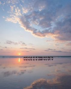 You can even take an epic sunset camel ride while you're there. | 19 Reasons Why Broome Should Be On Your Travel Bucket List