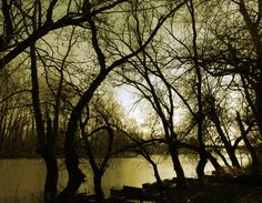 At the river Tisza - null