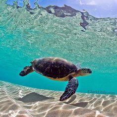 Waimea Bay, Hawaii SO CLEAR WATER! :D I would want to swim there!