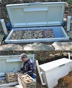 Bury a freezer to preserve vegetables.