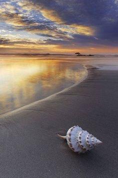 Beach Beauty                                                                                                                                                     Mehr