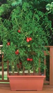 guide for container gardens