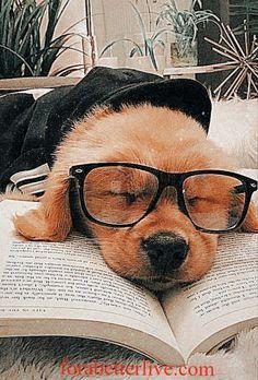 Super Cute Puppies, Cute Baby Dogs, Cute Little Puppies, Cute Funny Dogs, Cute Dogs And Puppies, Cute Funny Animals, Doggies, Cute Puppy Pics, Cute Wild Animals