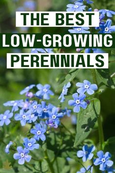 Looking for a low-growing perennial or two for edging a garden or for the front of a flowering border? Fortunately there are quite a few versatile choices. Read on to learn all about low-growing perennial plants and where to plant them in your garden. Herbaceous Border, Herbaceous Perennials, Shade Perennials, Flowers Perennials, Planting Flowers, Edging Plants, Garden Edging, Garden Borders, Garden Plants