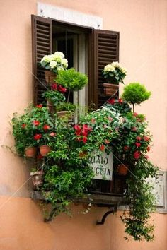 Image detail for -... : Images for Italy > Shuttered window with potted flowers Rome Italy