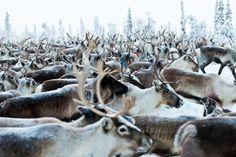 Renar Photo by Elisa Ferrari -- National Geographic Your Shot