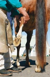 #Horse lameness check - 6 ways to detect lameness
