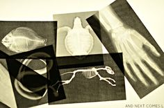 Laminated printable x-rays on the light table from And Next Comes L