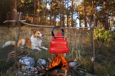 There's still time for one last summer camping trip! Here are some tips for taking your pup.