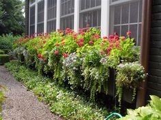 wow - a very long window box - so full and lush and lovely