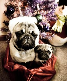 This is what I want for Christmas...EVERY Christmas :-)