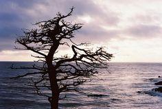 Tree beside beach