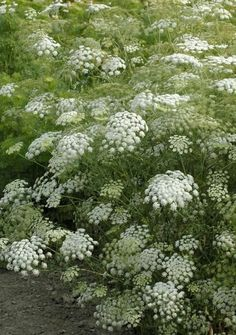 Flower Garden Types of the Most Beautiful White Flowers for Your Garden. Cut Flower Garden, Beautiful Flowers Garden, Flower Farm, Flower Gardening, Beautiful Beautiful, White Gardens, Farm Gardens, Garden Farm, Cottage Gardens