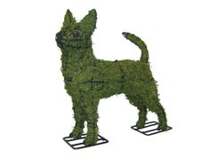 """Chihuahua 16"""" Mossed www.braungroup.com #topiary #containergardening #flowers #sculptures #dogs #dog #gardening"""