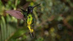 Las inéditas y extraordinarias fotos francesas que revelan la Colombia del siglo XIX - BBC Mundo Hummingbird, Birds, Image, Bbc News, World, Colombia, 19th Century, Animales, Photos