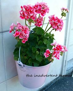 Perfect Table Centerpiece.  Use either a painted pail or spray paint one the color you like.  Place blooming potted plant (still in pot) in it for the perfect backyard party.