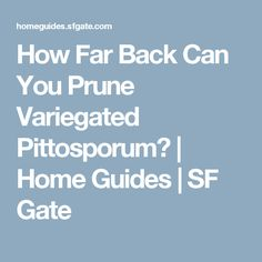 How Far Back Can You Prune Variegated Pittosporum? | Home Guides | SF Gate
