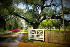 Bocage Plantation, Louisiana Gothic Revival Architecture, Louisiana Plantations, New Orleans Mardi Gras, Plantation Homes, Grand Homes, Southern Style, Beautiful Homes, Deck, Old Things