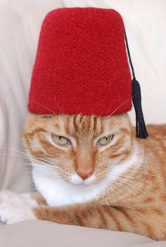 Fez's are cool!  Knitted Fez.  Obviously I would not make it for a cat. Maybe for a Doctor Who watch party.