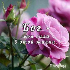 Good Morning, Happy Birthday, Bible, Flowers, Inspiration, Image, Cards, Faith, Buen Dia