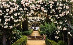 Mottisfont Abbey Rose Gardens, Hampshire, UK