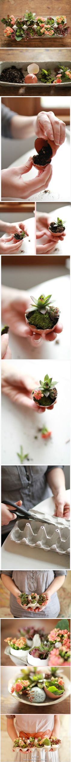 Creating your own eggshell garden. Materials needed: potting soil, egg shells, moss, and more meat, flowers. Steps: ① Fill in the empty eggshell right amount of potting soil (2) adding meat plant (3) add a layer of moss on top of the soil ④ If you like, you can add branches lovely flowers to inject color ⑤ cut an egg boxes on both sides, and join ...
