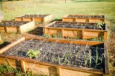 No Dig Gardening, Square Foot Gardening...and using mason jars for seedlings until they get strong