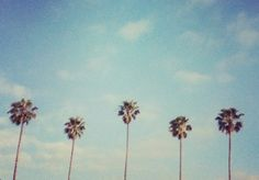 Palms in summer. #California #TheShirtCompany