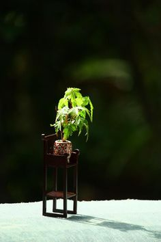 mini bonsai ...this is sitting on a miniature chair from a doll house...