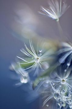 The Dew and the Dandelion http://www.travelinfreejustyouandme.com