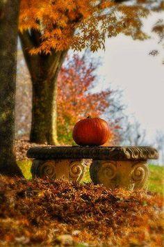 Autumm Herfst
