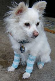 Sew DoggyStyle: Upcycled Doggy Leg Warmers