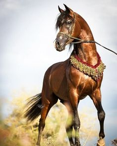 "139 Likes, 4 Comments - Mirzazadeh (@mirzazadehdubai) on Instagram: ""#carpet#picture#handmade#tabriz#frame#dubai#saudi#ابوظبی#دوبی#ریاض#decorate#السعودية#photooftheday#smile#style#amazing#look#art#artist#mydubai#persian#decor#design#horse#brand#world#riding#animals#Qatar#museum"""
