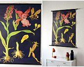 Vintage pull down chart Jung Koch Quentell school map botanical chart linum flax blue flower botanical West German biology print
