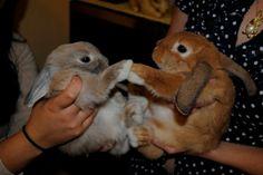 Bunny Paw Bump - May 1, 2012