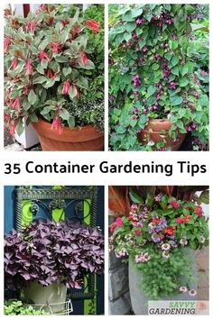 A container gardening tip list with 35 great suggestions for growing a beautiful container garden. Whether vegetables or flowers, these tips help you succeed. #containergardening #gardeninginpots