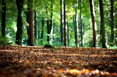 forest floor - Google Search