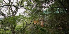 Teniqua Treetops tree houses in the Knysna forest