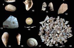 Vestigio más antiguo de consumo de moluscos por parte de nandertales hace 150.000 años - Cueva Bajondillo, en Torremolinos (Málaga)