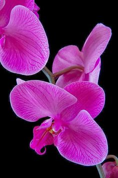 Orchid: Pantone Color of 2014.