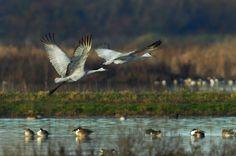 February - Winter Bird Festival - Galt