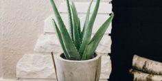 The Best Low-Maintenance Indoor Plants