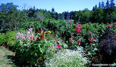 Flora at Green Gables, Prince Edward Island!  See our journey: http://www.gypsynester.com/green-gables.htm #travel #canada #pei