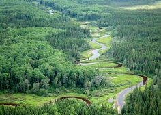 Take Action ; STOP A LOGGING ASSAULT ON CANADA'S BOREAL FOREST Canadian logging companies are pushing a plan that could destroy some five million acres of pristine wilderness in Quebec's Broadback River valley, one of the largest and last remaining untouched stretches of the boreal forest.